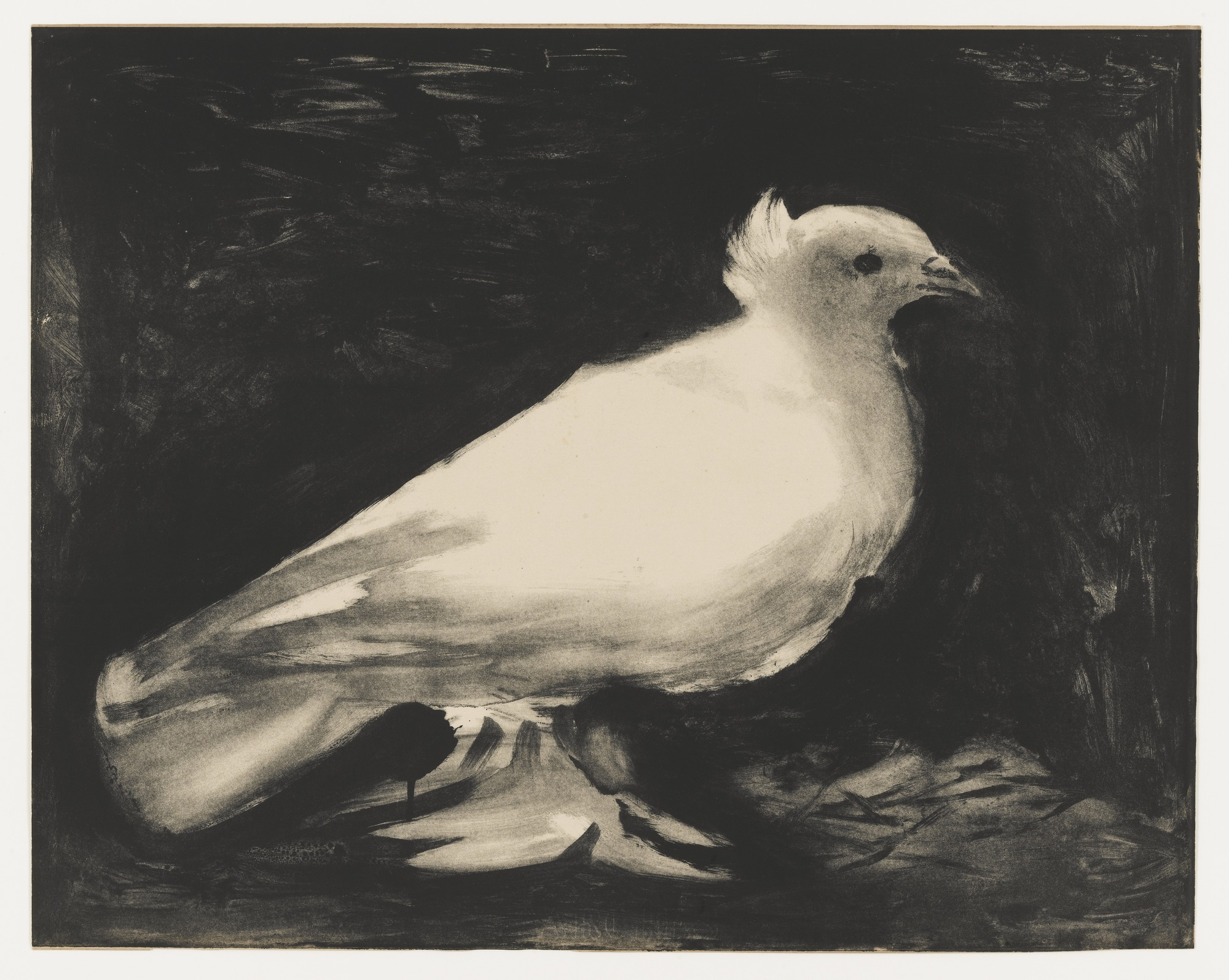 Scores outdoors doves as a symbol of peace what is the history picassos lithograph la colombe the dove buycottarizona