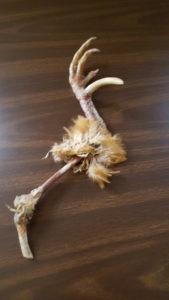 Turkey leg photo small